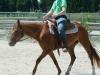 2014-06-07-sunny-trab-mit-birgit-02