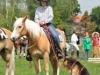 2009-06horsedogsalgen