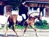 1996-07-t-hanfeld-anke