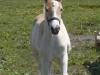 2003-06-arien-01