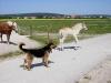 2003-06-arien-mit-laika-05