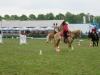 2015-05-15 Pferd inter 01.jpg