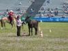 2015-05-16 Pferd inter 002.jpg