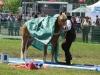 2015-05-16 Pferd inter 13.jpg