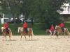 2014-05-29-pferd-inter-03