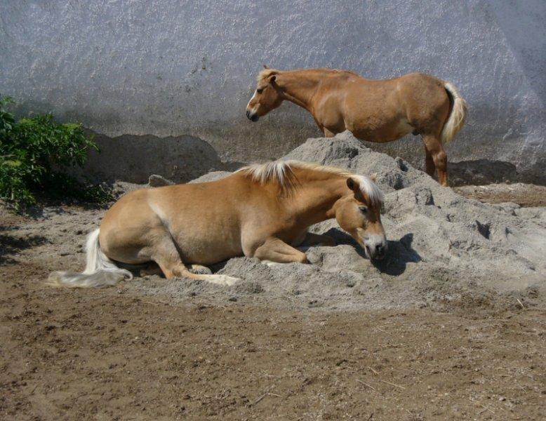 2007-07 Nessie und Nikolaus