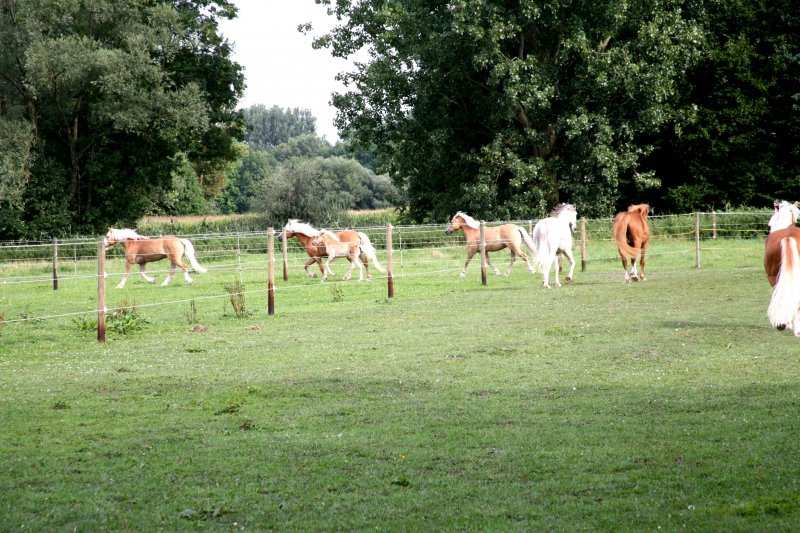 2008-09 Pferde auf der Koppel 02