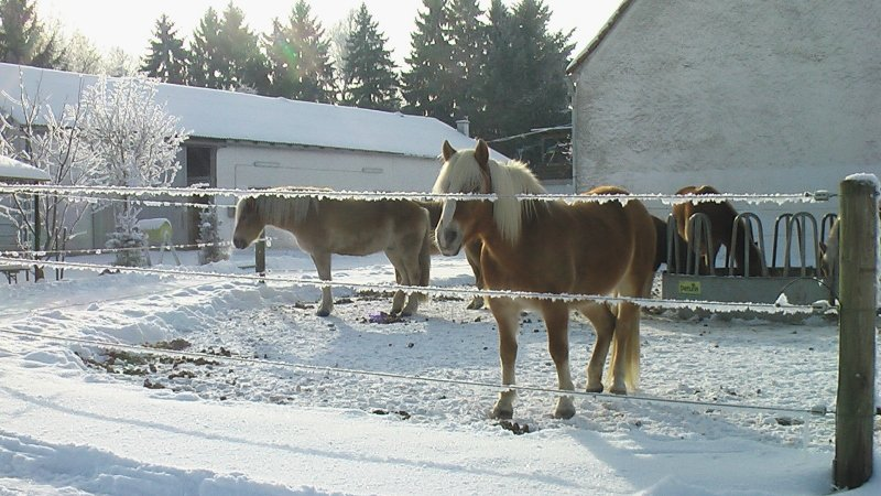 2012-12-13 Paddock 02