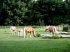 2008-09 Pferde auf der Koppel 03