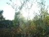 2003-09-busche-im-gegenlicht