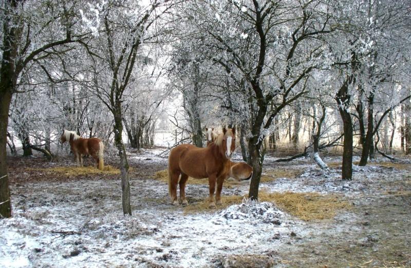 2007-12-pferde-im-obstgarten-02