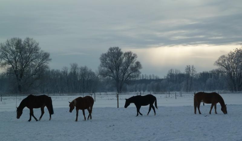 2010-12-19-winterkoppel