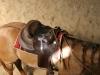 2006-07-kurs-penny-well-kleiner-bruder-04