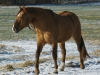 2009-12-20-klbruder-01