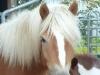 2011-09-29-artanis-02-klein_