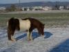 2009-12-20-heidi-01-klein_