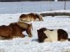 2010-12-26-winterkoppel-04
