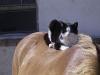 2006-06-ronnie-auf-nikolaus
