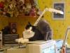 2007-02-ronnie-ginny-auf-dem-bildschirm